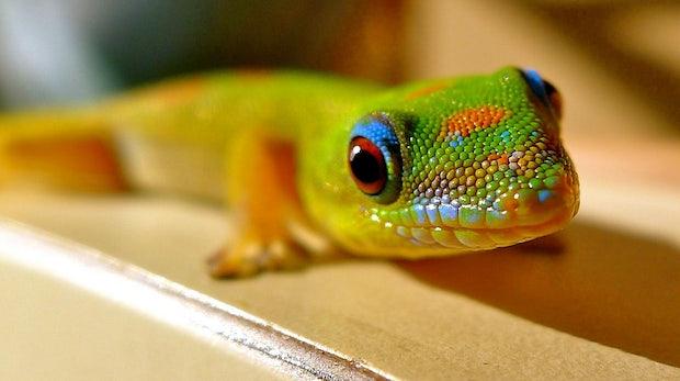 Boot to Gecko: Mozillas Antwort auf Chrome OS