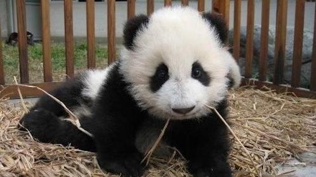Panda Update: Googles neuer Algorithmus jetzt auch in Deutschland live