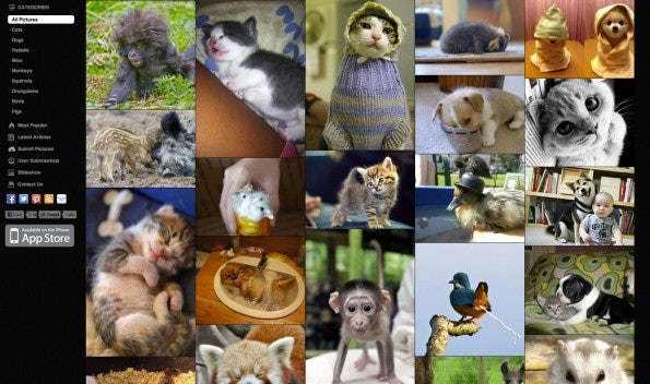 http://t3n.de/news/wp-content/uploads/2012/05/infinite-scrolling-cutest-paw-595x352.jpg