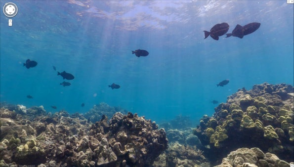 http://t3n.de/news/wp-content/uploads/2012/09/Google-SeaView-Great-Barrier-Reef-12-595x339.png