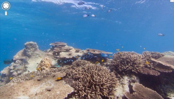http://t3n.de/news/wp-content/uploads/2012/09/Google-SeaView-Great-Barrier-Reef-8-595x340.png