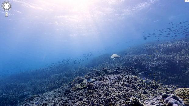 Google SeaView zeigt atemberaubende Bilder des Great Barrier Reef [Galerie]