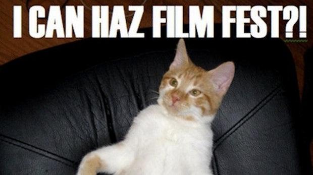 Gewählt: Bestes Katzenvideo aller Zeiten