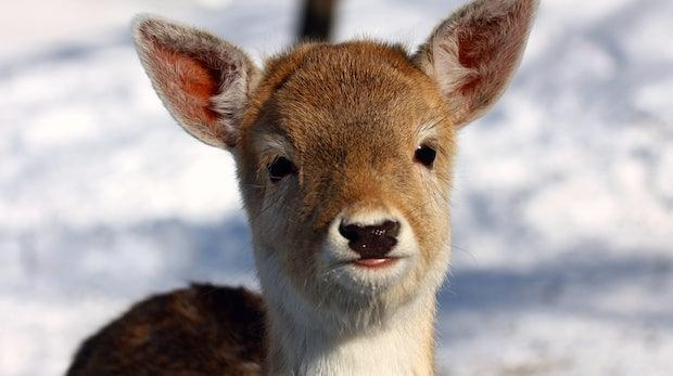 Süße Tierbilder erhöhen deine Konzentration [Studie]
