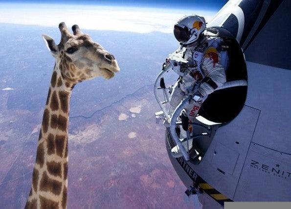 http://t3n.de/news/wp-content/uploads/2012/10/felix-baumgartner-giraffe-595x428.jpeg