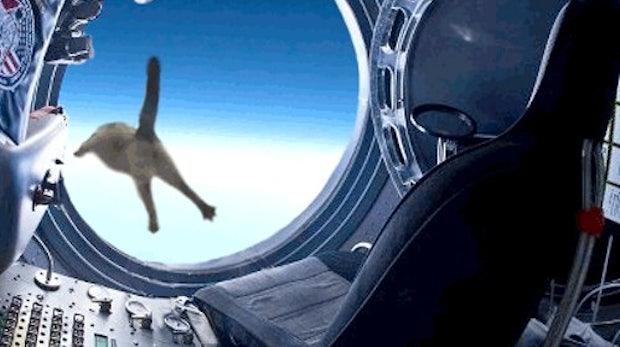 Felix Baumgartner: Vom Rekordspringer zum Internet-Meme