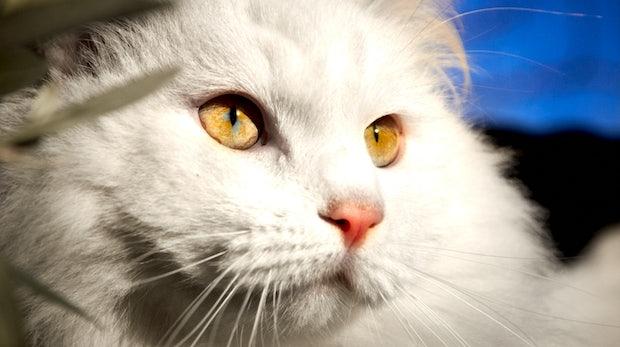 Wie ein Entwickler seinen Job nach China auslagerte, um Katzenvideos zu schauen