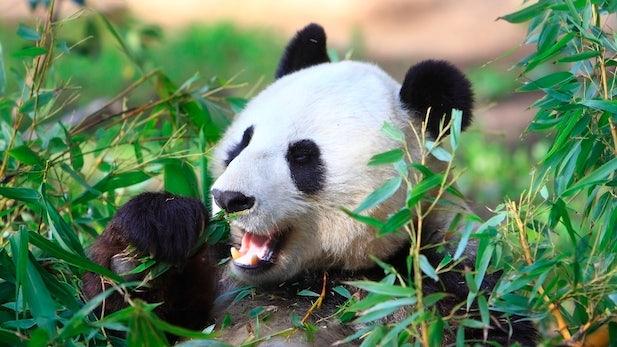 SEO: Google rollt neues Panda-Update aus