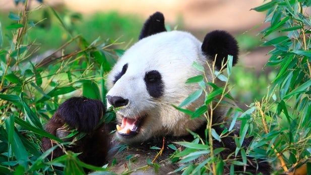 Panda 4.0: Google schraubt wieder am Algorithmus