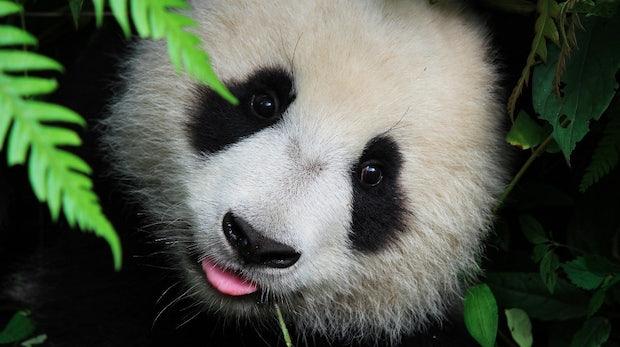 Panda 4.1: Die Gewinner und Verlierer im deutschsprachigen Raum