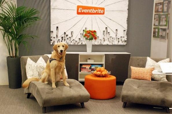 Auch das ist ein Argument im War for Talents: Hunde sind bei Eventbrite erlaubt. (Bild: Eventbrite)