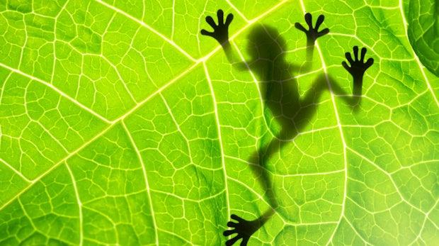 9 Praxistipps für Screaming Frog: So nutzt du alle Vorteile des SEO-Tools
