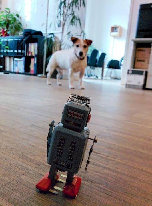 """Bei <a href=""""https://www.network-publishing.de"""">network-publishing</a> kommt es zum Showdown zwischen Hund und Maschine. Harry ist bereit."""