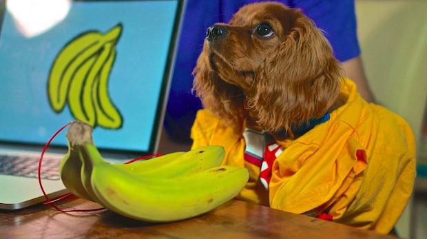"""""""Von wem krieg ich denn das WLAN-Passwort?"""" – """"Von der Banane da drüben"""""""