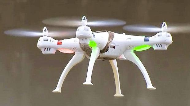 Digital ist nicht immer besser: Wie Adler künftig Drohnen vom Himmel holen sollen