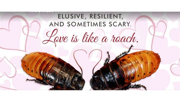 Liebe ist wie eine Kakerlake (Bild: Screenshot bronxzoo.com)