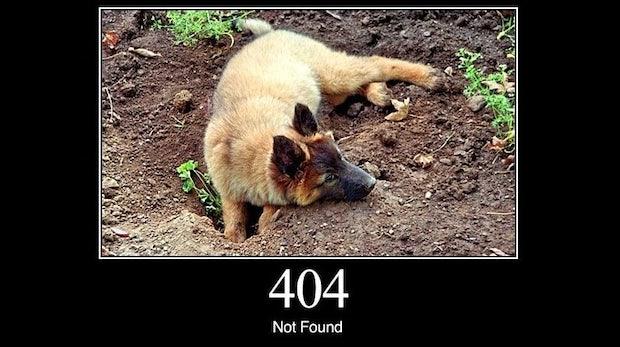 404: HTTP-Status erklärt von Hunden